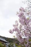 佐仓花在日本 免版税图库摄影