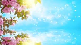 佐仓花樱花,水反射,光 贺卡背景模板 浅深度 被定调子的软性 分行明亮的开花的绿色本质春天结构树 库存图片