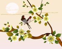 佐仓 在庭院开花的樱桃和鸟的晚上 库存照片