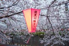 佐仓在Meguro河,东京,日本的节日灯笼在春天 非英国文本意味` Meguro河佐仓节日` 免版税库存照片