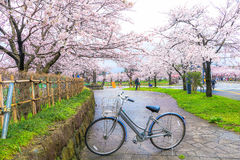 佐仓节日,新宿,日本 图库摄影