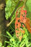整体叶子吃毛虫 免版税库存照片