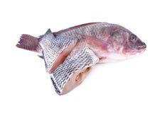 整体和部分切开了在白色backgroun的新鲜的尼罗罗非鱼鱼 库存图片