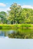 水体在公园是长得太大的泥 库存图片
