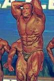 体型冠军世界 免版税图库摄影