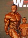 体型冠军世界 库存照片