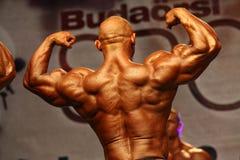 体型冠军欧洲wbpf 库存图片