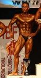 体型冠军ibff世界 免版税图库摄影