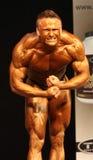 体型冠军ibff世界 库存图片