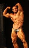 体型冠军ibff世界 库存照片