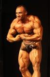 体型冠军ibff世界 免版税库存图片