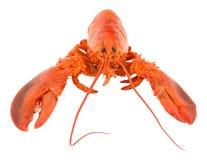 整体煮熟的桃红色龙虾 免版税库存图片