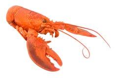 整体煮熟的桃红色龙虾 库存照片