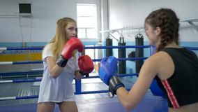 体育和人们,行使和战斗在健身房的拳击台的少妇 股票录像