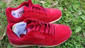 体育和金钱 票据在运动鞋 免版税图库摄影