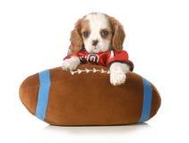 体育猎犬 免版税图库摄影