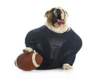 体育运动猎犬 库存图片
