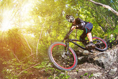 体育运动 一辆自行车的一个骑自行车者有一个登山车的在森林里 免版税库存图片