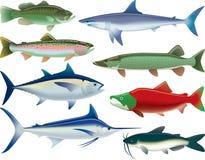 体育鱼 库存图片