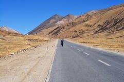 佛教徒朝圣途径藏语 免版税库存照片