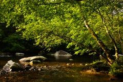 佛瑞蒙河,伟大的发烟性国家公园 库存照片