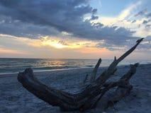 佛罗里达与漂流木头的墨西哥湾海岸日落 免版税库存照片