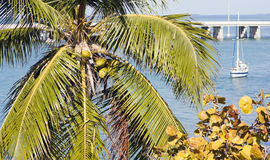 佛罗里达假期 免版税图库摄影