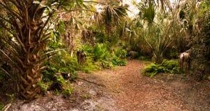 佛罗里达在黄昏的硬木吊床 免版税库存照片