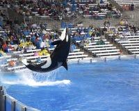 佛罗里达奥兰多海运世界 免版税库存照片
