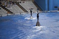 佛罗里达奥兰多海运世界 免版税库存图片