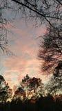 佛罗里达日落黑色树 免版税库存图片