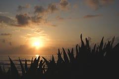 佛罗里达早晨 库存照片