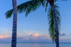 佛罗里达棕榈树和完善的日出 库存图片