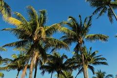佛罗里达棕榈树背景 免版税库存照片