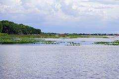 佛罗里达沼泽和湖 库存图片