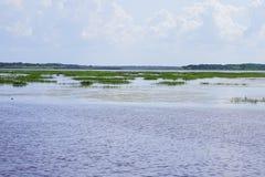 佛罗里达沼泽和草 图库摄影
