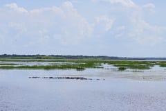 佛罗里达沼泽和鸭子 免版税库存照片