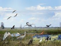 佛罗里达沼泽地拼贴画 免版税库存照片