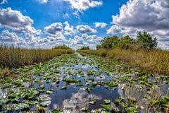 佛罗里达沼泽地视图全景风景 免版税库存图片