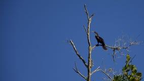 佛罗里达沼泽地鸟 免版税库存图片