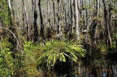佛罗里达沼泽地 免版税图库摄影