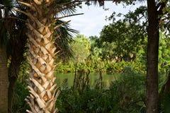 佛罗里达沼泽风景 库存照片
