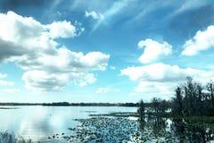 佛罗里达沼泽 免版税图库摄影