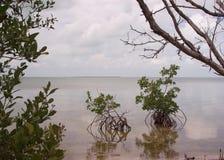 佛罗里达海湾 图库摄影
