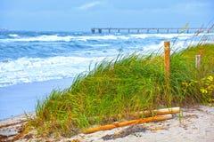 佛罗里达海滩草沙丘和波浪在风暴期间 库存照片