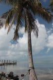 佛罗里达群岛棕榈和海湾4 库存照片