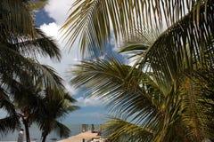 佛罗里达群岛棕榈和船坞 免版税库存图片