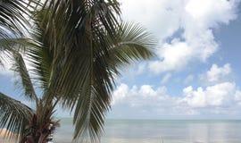 佛罗里达群岛棕榈3 免版税库存照片