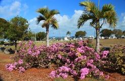 佛罗里达群岛- Islamorada 免版税库存照片