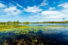 佛罗里达自然保护区 库存图片